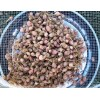 German Red, garlic seeds - rounds, 50 grams
