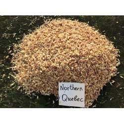 Northern Quebec Hardneck, garlic seeds,