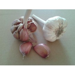 German Red, garlic seeds bulb