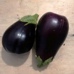 Eggplant Black King, seeds