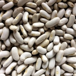 Cassouvlet, bean seeds