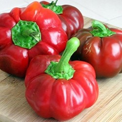 Pepper Sweet Pimento Elite, seeds