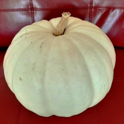 Pumpkin  White, seeds