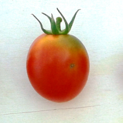 Tomato Amish Paste,   Heirloom seeds