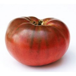 Tomato Cherokee Purple,  Heirloom seeds