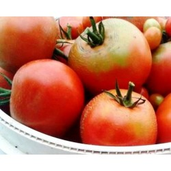Tomato Saint Pierre,  Heirloom seeds